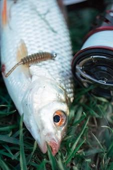 Cebo de pesca en peces sobre la hierba