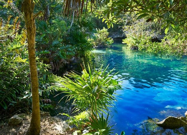 Cenote en la riviera maya de méxico maya