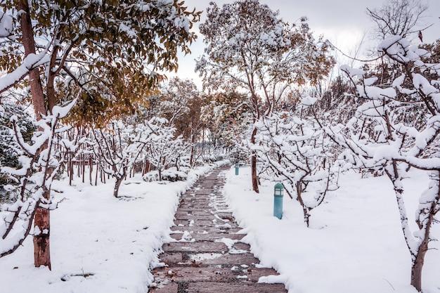 Central park de nueva york en la nieve