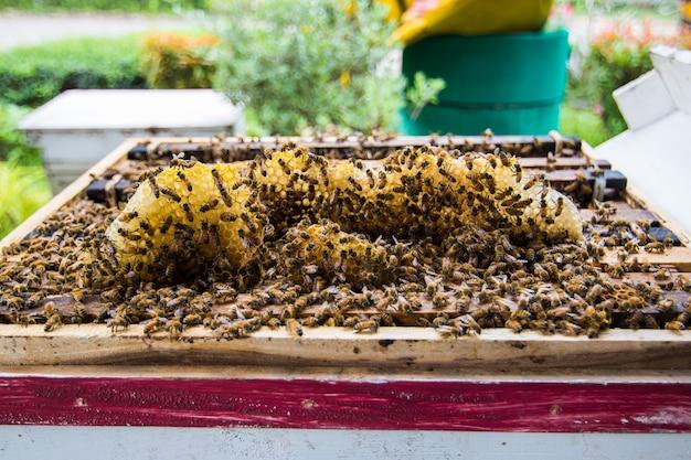 Cerca de abejas voladoras y colmena de madera