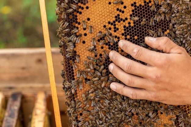 Cerca del apicultor sosteniendo un panal lleno de abejas