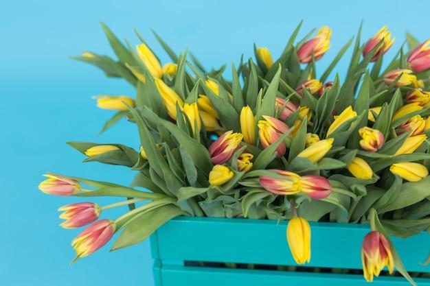 Cerca de la caja de madera brillante con tulipanes amarillos en la pared azul