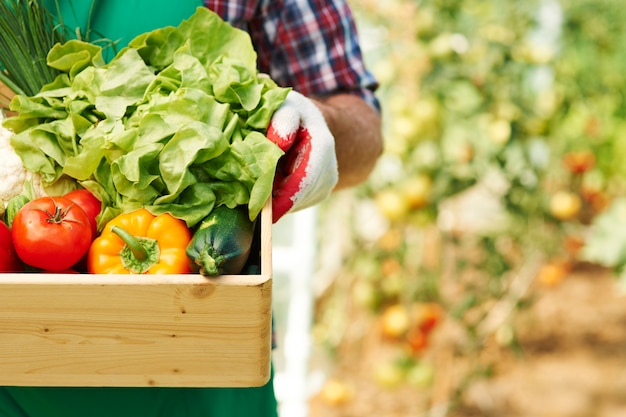 Cerca de la caja con verduras maduras