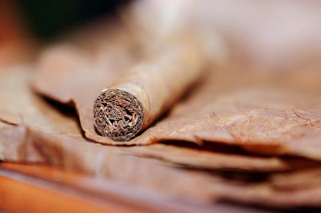 Cerca de cigarro en las hojas de tabaco