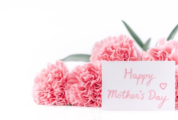 Cerca de clavel rosa sobre fondo blanco para la flor del día de la madre