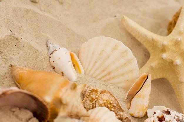 Cerca de conchas y estrellas de mar sobre la arena