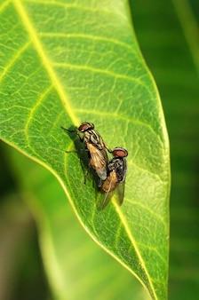 Cerca de mosca haciendo el amor
