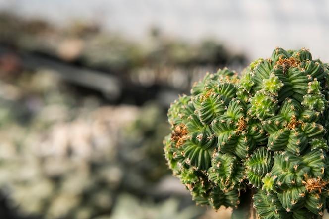 Cerca de suculentas y cactus
