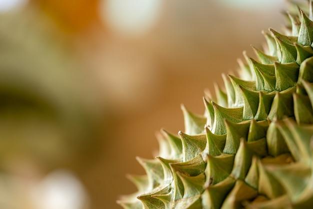 Cerca de los detalles se ven las espinas de durian cerca.