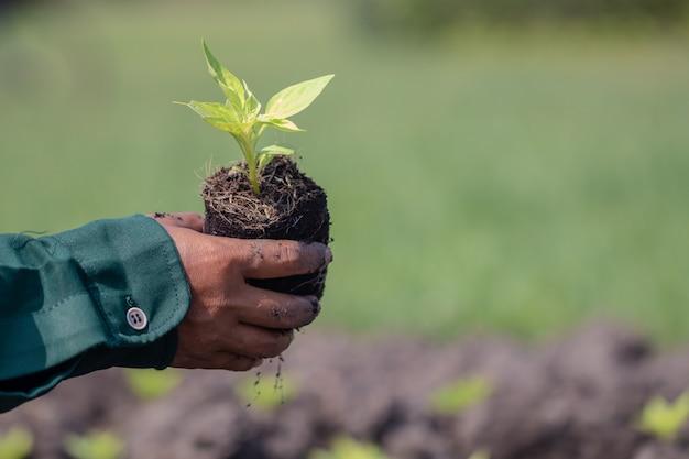 De cerca con enfoque selectivo en una planta de semillero