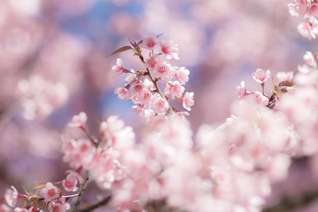 Cerca de la flor de cerezo durante el festival hanami