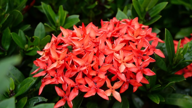 Cerca de flores de aguja roja