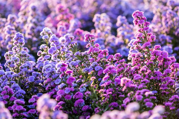 Cerca de flores de campo de cortador florece