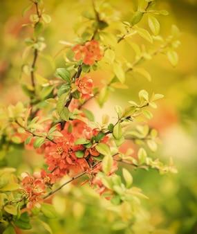 Cerca de las flores en flor en el árbol en primavera