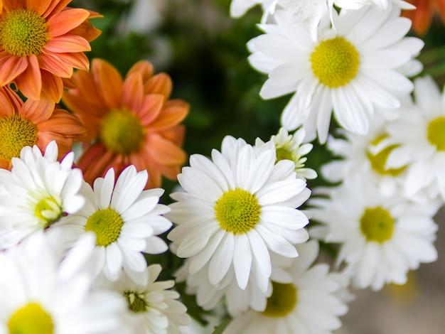 Cerca de flores de manzanilla fresca