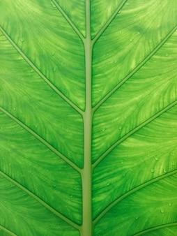 Cerca del fondo de textura de hoja verde con gotas de lluvia