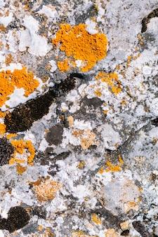 Cerca del fondo de textura de piedra de molde de musgo