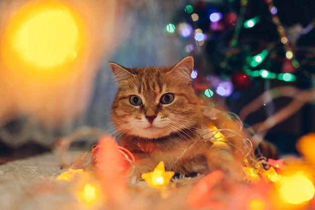 Cerca de gato atrapado jugando con luces de iluminación bajo el árbol de navidad en casa año nuevo