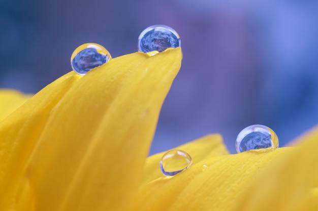 Cerca de gotas de agua en el girasol