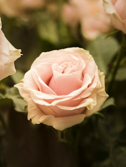 Cerca de la hermosa flor de la boda