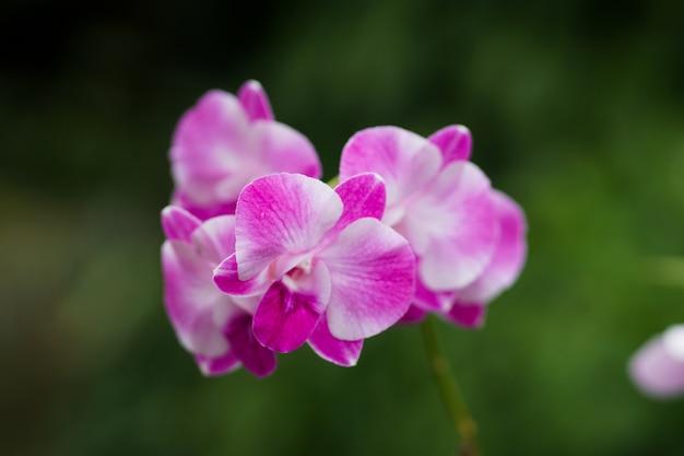 De cerca, hermosa orquídea de fondo
