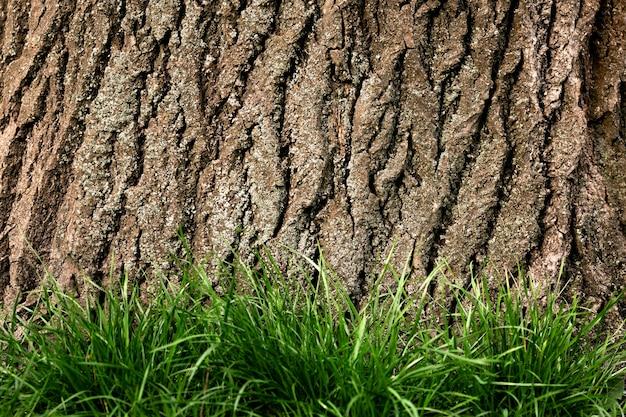 Cerca de la hermosa textura de corteza de árbol