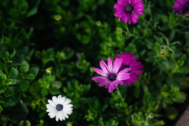 Cerca de hermosas flores frescas sobre fondo verde, concepto de naturaleza