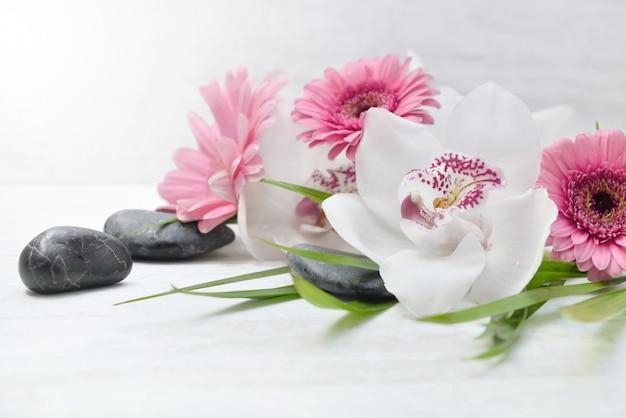 Cerca de hermosas orquídeas blancas y margaritas rosadas en guijarros negros