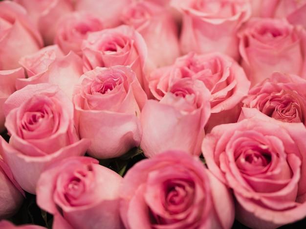 Cerca de hermosas rosas rosadas