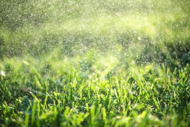 Cerca de hierba fresca y espesa con gotas de agua temprano en la mañana