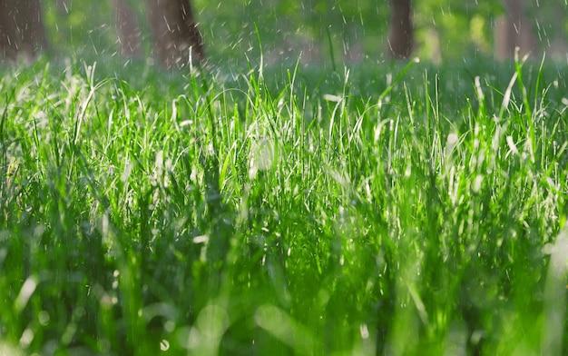 Cerca de la hierba verde húmeda en tiempo lluvioso
