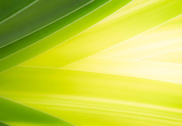 De cerca la hoja verde que sombrea el color de los degradados de verde oscuro a amarillo brillante