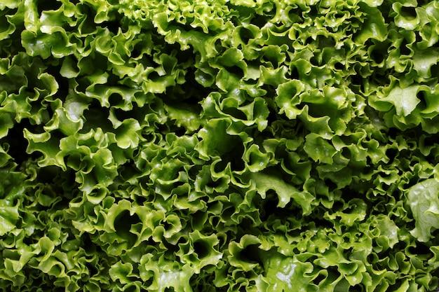 Cerca de hojas de lechuga