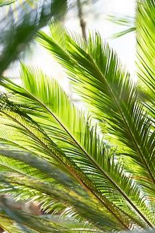 Cerca de hojas de palma en un día soleado en invernadero