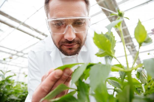 Cerca del hombre con gafas trabajando con plantas
