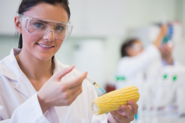 Cerca de investigador científico inyectando mazorca de maíz en el laboratorio