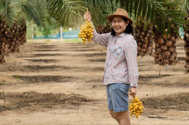 Cerca del jardinero cuidando la plantación de palmeras datileras