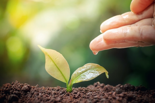 Cerca de la mano de la mujer nutriendo y regando las plantas jóvenes en el jardín