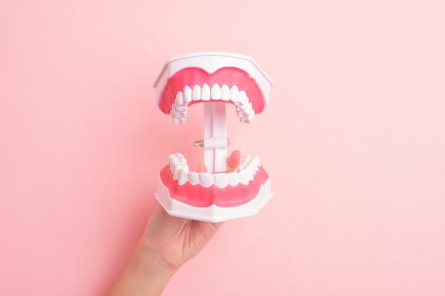 Cerca de la mano de la mujer sostiene dientes modelo artificiales para la limpieza dental de demostración