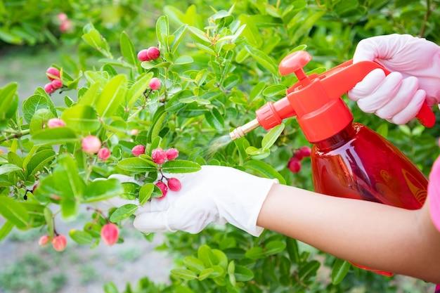 De cerca, la mano de la mujer usa guantes usando una botella de mezcla de pulverización bio fertilizante para vegetales verdes en la granja. mantenimiento de vegetales no tóxicos para comer en la familia.