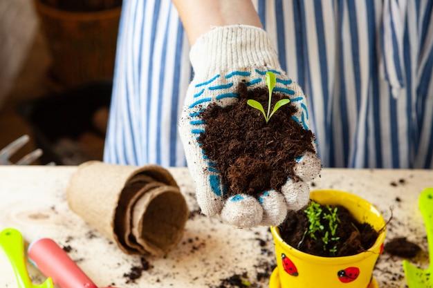Cerca de manos trasplantar una planta en una maceta nueva