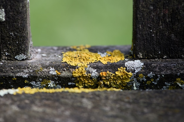 Cerca de musgo amarillo sobre madera