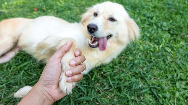 Cerca de una pata de perro en una mano humana.