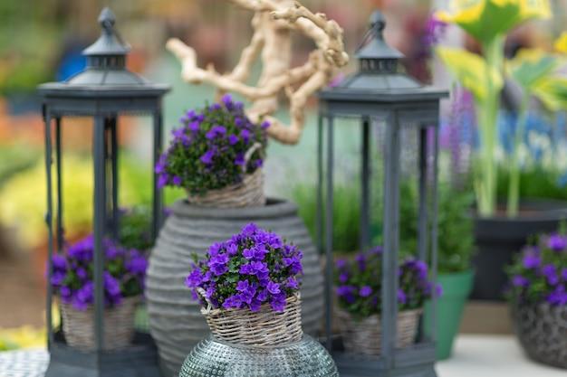 Cerca de pequeñas campanillas llamadas campanula en una maceta con elementos decorativos