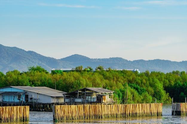 Cerca de protección contra olas hecha de bambúes secos en el bosque de manglar en el mar para evitar la erosión de la costa. pueblo pesquero en bosque de manglar frente a la montaña