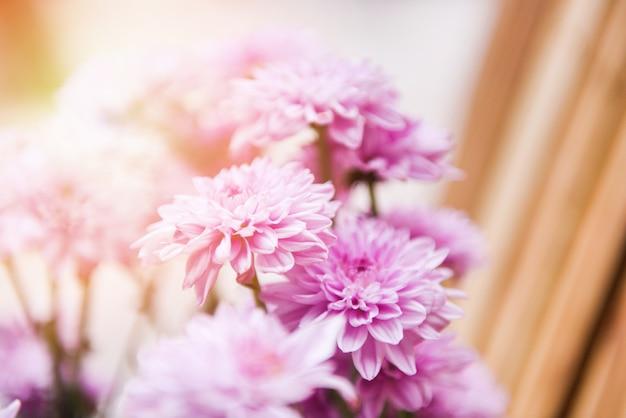 Cerca de racimo de flores de crisantemo rosa púrpura hermoso / decoración de flores de crisantemo en un jarrón en una luminosa sala de estar