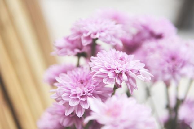 Cerca de racimo de flores de crisantemo rosa púrpura hermoso / decoración de flores de crisantemo en un jarrón en una planta de sala de estar brillante