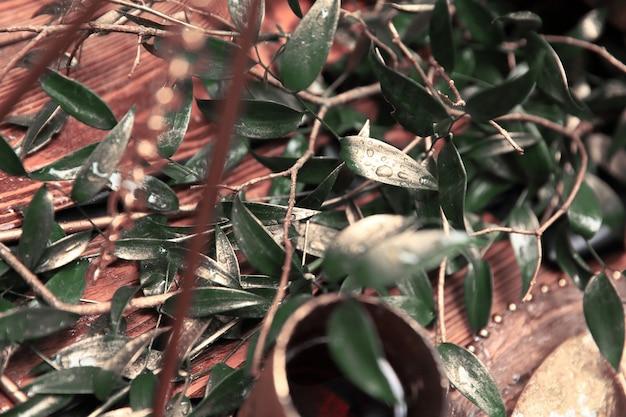 De cerca. rama de olivo en la mesa de madera.