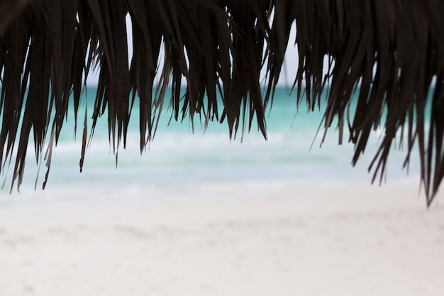 Cerca de sombrillas de palma en la playa