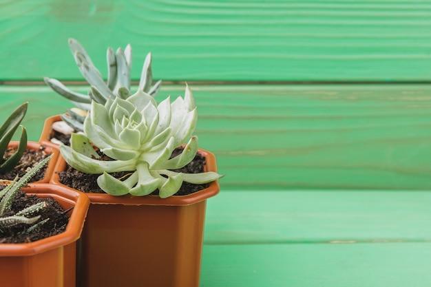 Cerca de la suculenta colección de plantas caseras en la mesa de madera